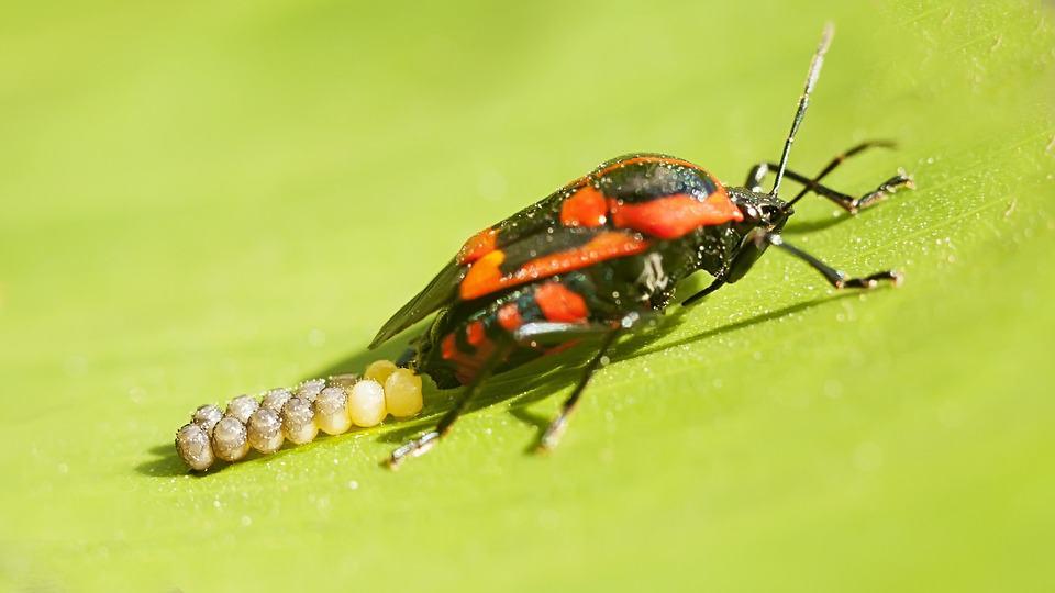 Beware of Invading Bugs As Temperatures Drop