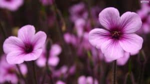 marvelous-purple-flowers-wallpaper