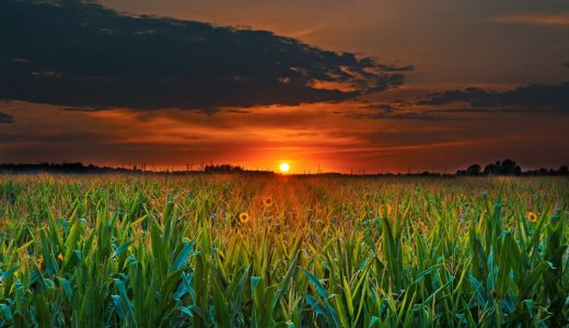 Money making Agriculture Business Ideas